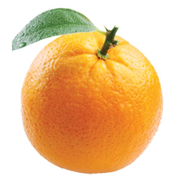 orangetrans